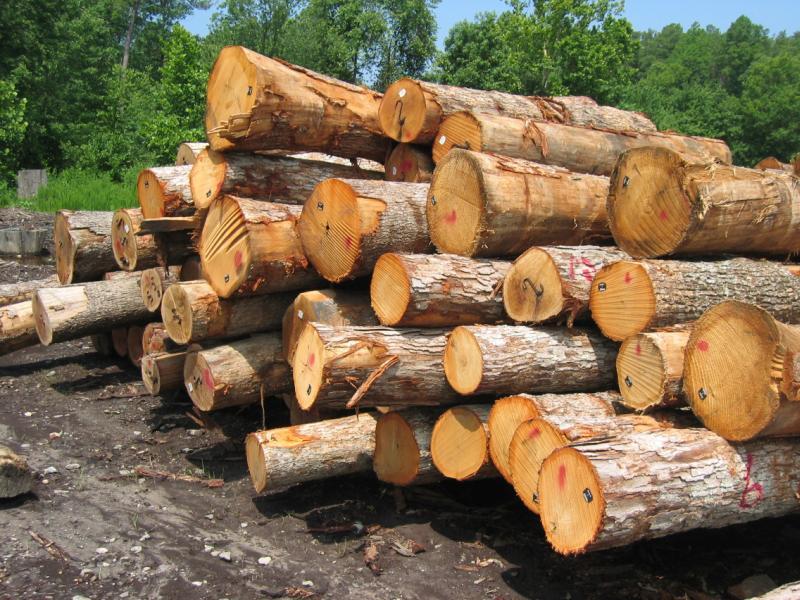 چوب و رنگ جوتن